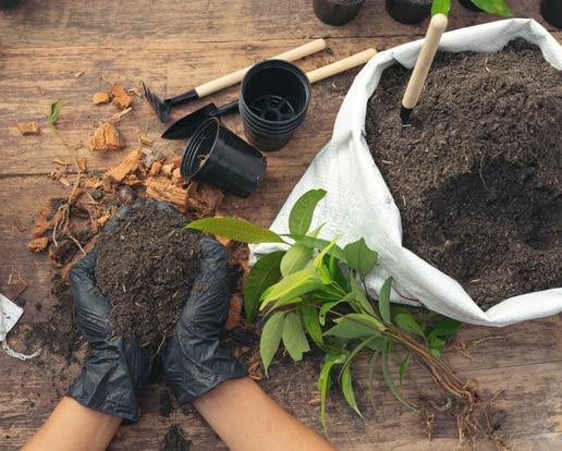 Gljivarski kompost za organski vrt
